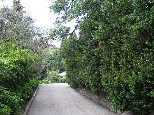 Территория санатория «Ясная поляна»